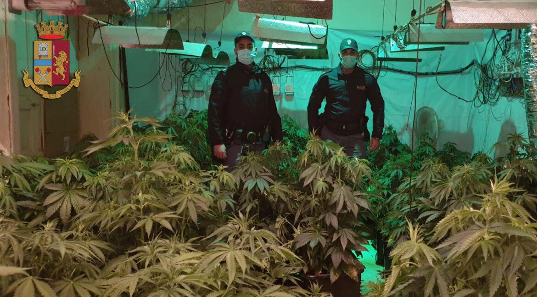 Gli agenti del commissariato Porta Nuova individuano una serra indoor